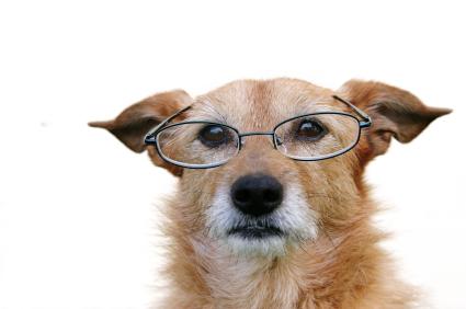 Starzenie się psa