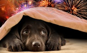 pets & fireworks