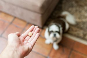 Human Medications and Pet Medications
