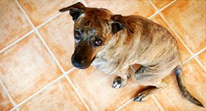 house-trained dog still poops inside