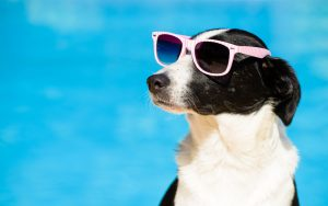 protect your pet from the heat