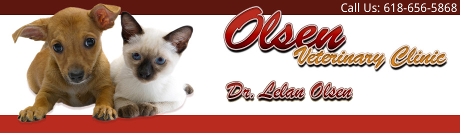 Olsen Veterinary Clinic