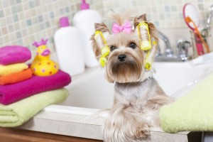 proper hygiene for your pet