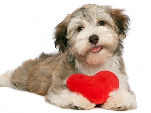 pet products your pet will love