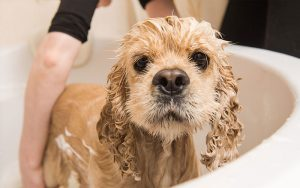 how often should I bathe my dog