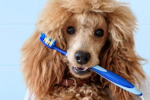 brush your dog's teeth