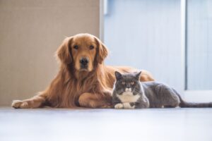 Can Dogs and Cats Cohabitate