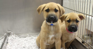 What to Do Before Adopting a New Pet